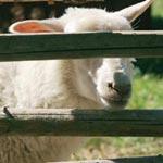 Eläin: Eläin -cd